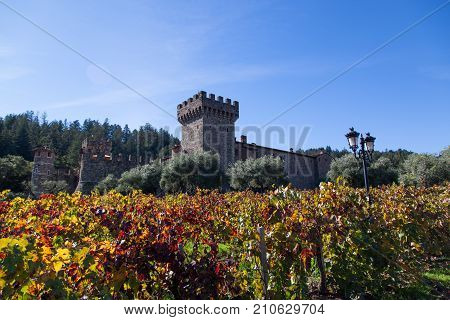 NAPA VALLEY CALIFORNIA - November 8 2016 : Castello di Amorosa's turret rising above large olive trees and fall grape vine leaves on November 8 2016 in Napa Valley California.