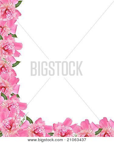 Pnk Peony Floral Border