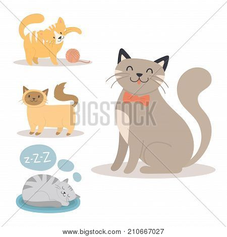 Portrait cat animal sleep pet cute kitten purebred feline kitty domestic fur adorable mammal character vector illustration. Prettyfunny tabby beautiful cat.