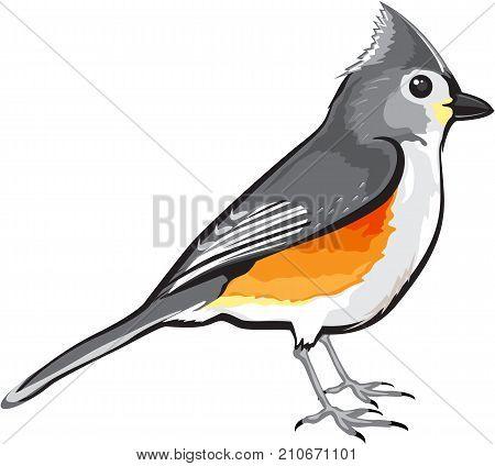 Tufted Titmouse Bird vector illustration clip-art graphic design file