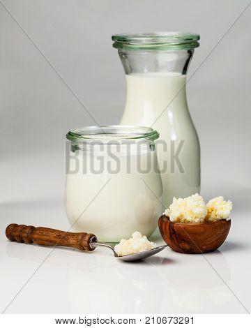 Milk kefir grains. milk kefir or búlgaros is a fermented milk drink that originated in the Caucasus Mountains made with kefir