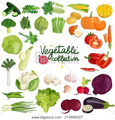 Vegetables and herbs collection with potato, corn, beet, eggplant, broccoli, arugula, leek and lettuce isolated vector illustration