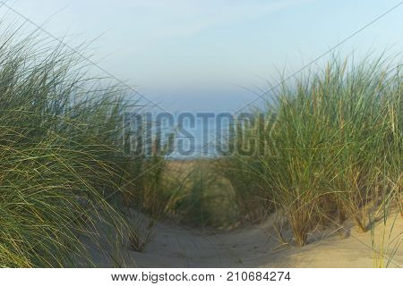 Green grass in the sandy yellow dunes of the Baltic Sea against the backdrop of the blue sea strip in autumn