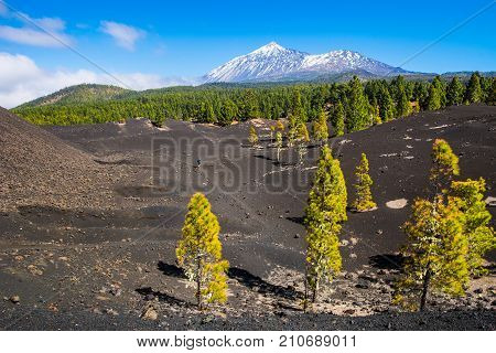 View of the volcano Teide near Arenas Negras. Grandeur nature and small man. Teide National Park Tenerife Canary Islands Spain. Artistic picture. Beauty world.