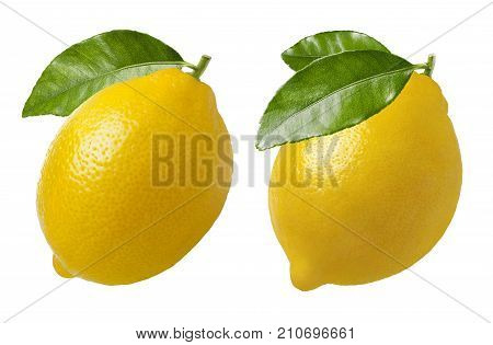 Lemon with leaf set isolated on white bacground as package design element