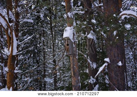 Bird house on the tree in winter. Birdhouse bird nature nest pine winter