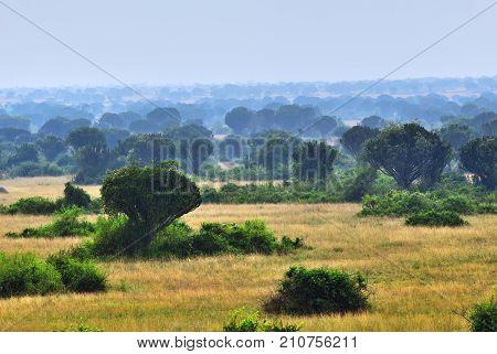 Queen Elizabeth Park, Uganda