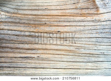 Close Up To Old Stump Surface Texture, Wooden Texture