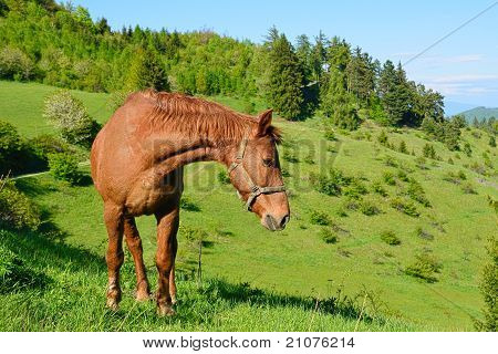 horse in the green nature