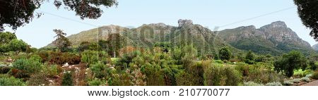 LANDSCAPE, TREES AND OTHER VEGETATION IN THE FORE GROUND AND THE BACK OF TABLE MOUNTAIN IN THE BACK GROUND