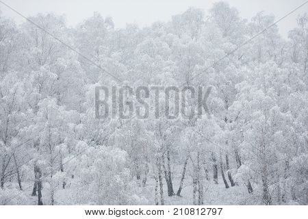 Fairy winter forest in the snow. Winter time. Heavy winter snowfall. Winter trees in the snow. Beautiful winter landscape. The trunks and branches of winter trees.