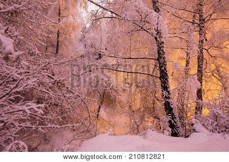 Fabulous night winter forest in the snow. Winter time. Heavy winter snowfall. Winter trees in the snow. Beautiful winter landscape. The trunks and branches of winter trees. Mountain winter landscape