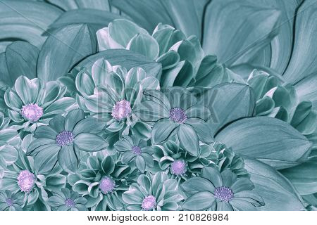 Floral turquoise-pearl background of flowers of dahlia. Bright flower arrangement. A bouquet of turquoise dahlias. Nature.