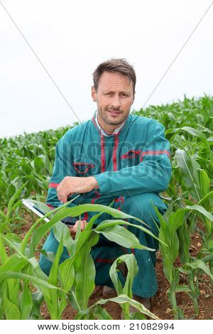 Farmer with electronic tablet analysing corn field