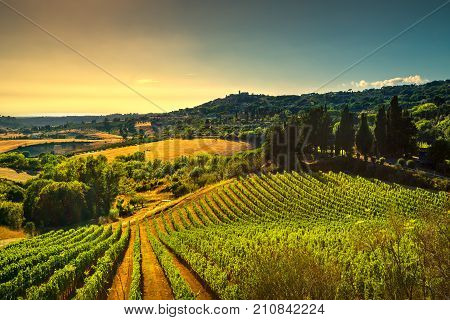 Casale Marittimo village vineyards and countryside landscape in Maremma. Pisa Tuscany Italy Europe.
