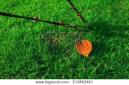 Steel wire rope sling clip on green grass and red dry leaf