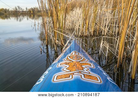 Fort Collins, CO, USA - October 23, 2017: Fall paddling on a calm lake in Colorado - a bow of racing stand up paddleboard by Starboard with the tiki logo and reeds.