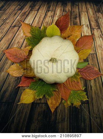 White pumpkin and colourful leaves/ Halloween background - white pumpkin and green,red and yellow  autumn leaves on wooden background.