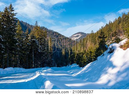 Road Through Coniferous Forest In Winter