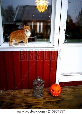 traditional swedish house pumpkin dekoration in Halloween