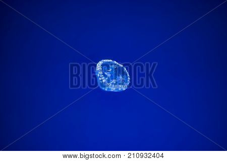 Blue Spotted Jellyfish With Delicate White Spots And Translucent Cupped Body, Floating In Deep Water