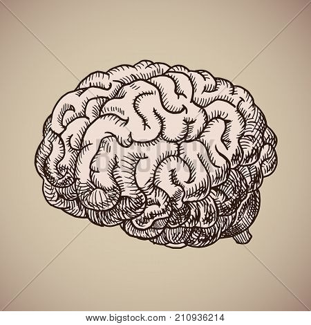 Brain engraving. Pink human body. Vector illustration in sketch style. EPS 10