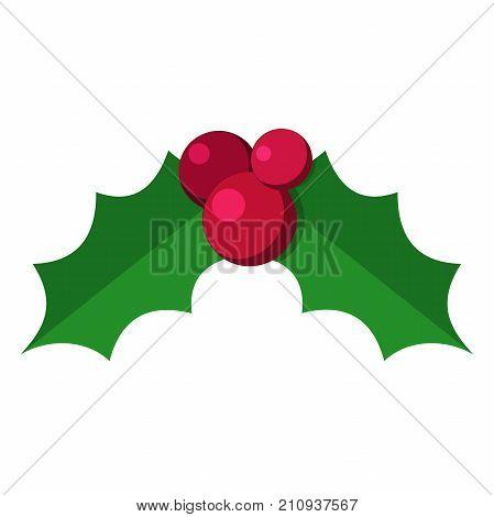 European christmas berry holly ilex aquifolium leaves and fruit. Vector illustration isolated on white background