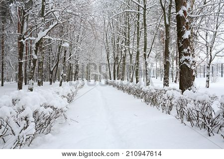 Winter landscape in the snow. After a heavy snowfall the earth, the trees and bushes covered in fluffy snow. It's snowing. Nature of Europe. Belarus.