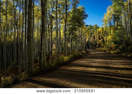 Road To Aspen In Autumn With Blue Sky