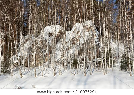 Snow-covered nameless cliffs behind the tree trunks on the shore of icy Chusovaya river. Ural, Russia.