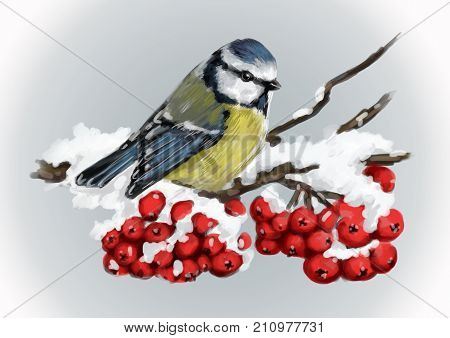 Titmouse sitting on snow-covered branch of mountain ash. Winter nature