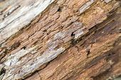picture of a full frame rotting wood detail poster