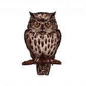 Owl or eagle-owl bird sketch vector isolated icon. Wild forest feathered nocturnal predatory bird of prey sitting on branch. Wildlife fauna and zoology symbol for zoo nature adventure club poster