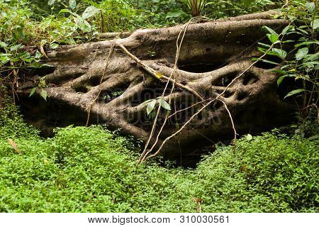 Forest At Niah Caves National Park Miri Malaysia