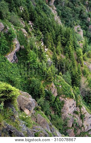 Herd Of Sheep Climbing Among The Rocks And Trees On A Steep Slope. Fagaras Mountain Romania