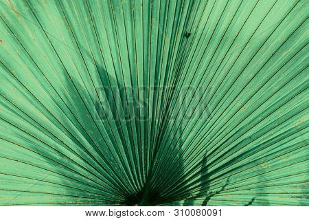 Lovely nature background. Large green palm fronds up close.