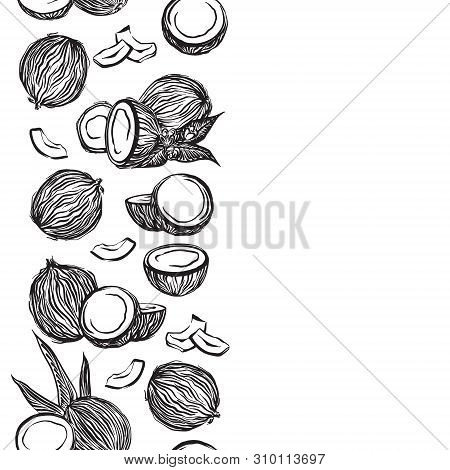 Hand Drawn Coconuts Outline Sketch Vertical Border. Vector Black Ink Drawing Coco Fruits. Graphic Il
