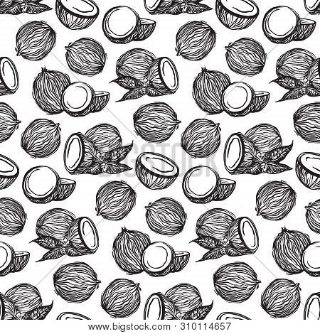 Black Sketch Coconuts Outline Seamless Pattern. Vector Drawing Coco Fruits. Hand Drawn Endless Illus