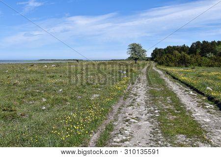 Dirt Road In A Beautiful Coastland By Spring Season At The Swedish Island Oland