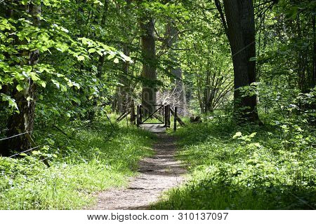 Footpath In A Lush Green Forest By Springtime At The Swedish Nature Reserve Halltorps Hage