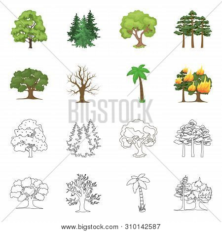 Vector Illustration Of Tree And Forest Symbol. Collection Of Tree And Green Vector Icon For Stock.