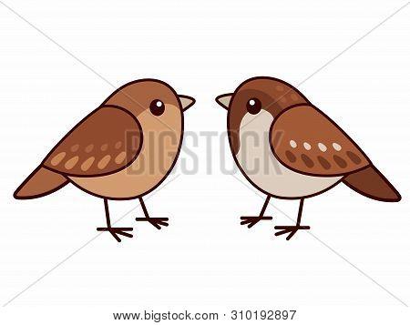 Male And Female House Sparrows. Cute Cartoon Bird Couple, Isolated Vector Clip Art Illustration.