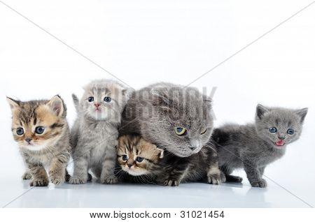 Cats Family Portrait