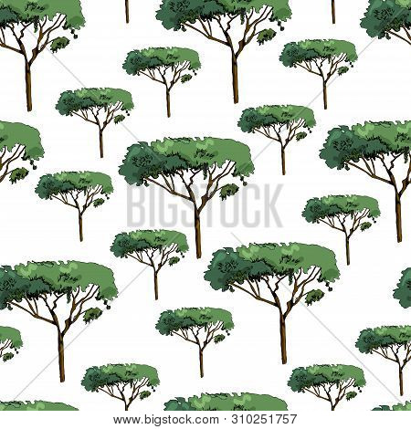 Seamless Pattern With Italian Pines. Ink And Colored Elements Isolated On White Background. Vector I