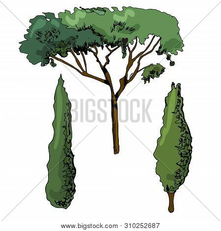 Hand Drawn Sketch Of Italian Trees. Ink And Colored Elements Isolated On White Background. Vector Il