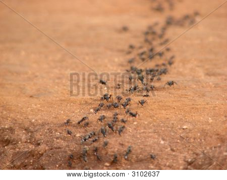 A collany of giant ants crossing the road. poster
