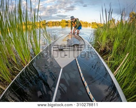 Senior male is launching stand up paddleboard on a lake through reeds