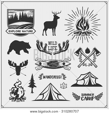 Camping Club Emblems And Design Elements With Forest Animals And Equipment. Forest Camping, Outdoor