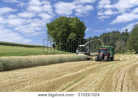 Forage Harvester And Tractor With Trailer At Harvest Of Whole Crop Silage For Biogas On A Cereal Fie