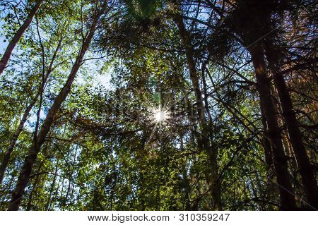 The Sun's Rays Through The Crowns Of Tree